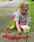 Whoops - Picking red currents